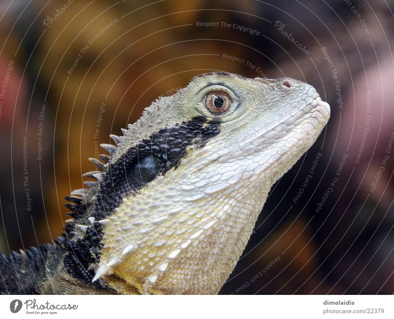 Eyes Animal Barn Spine Saurians Dinosaur Lizards Salamander