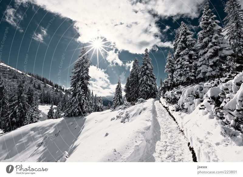 panoramic trail Nature Landscape Sky Clouds Sun Winter Beautiful weather Snow Tree Forest Alps Mountain Lanes & trails Blue Black White sermon chair