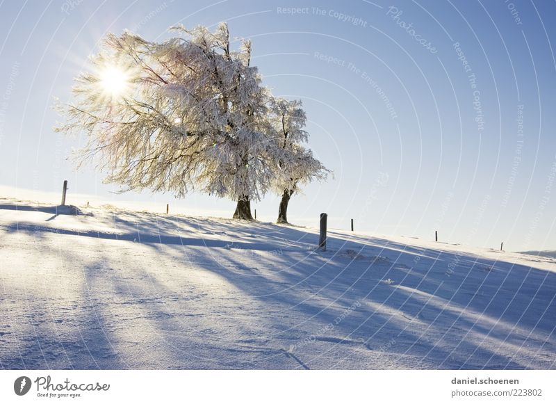 Nature White Tree Blue Sun Vacation & Travel Winter Snow Mountain Landscape Environment Bright Ice Frost Beautiful weather Winter vacation