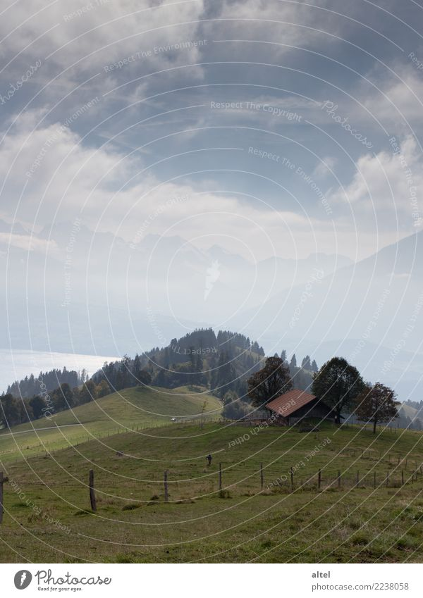 Bernese Oberland #1 Human being Child Infancy Nature Landscape Animal Clouds Horizon Autumn Meadow Alps Mountain Switzerland Hut Relaxation Hiking Moody Happy