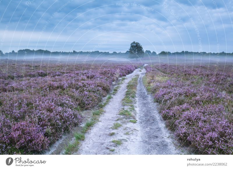 road between pink flowering meadows with heather Summer Nature Landscape Plant Sky Sunrise Sunset Fog Tree Flower Blossom Meadow Street Lanes & trails Pink