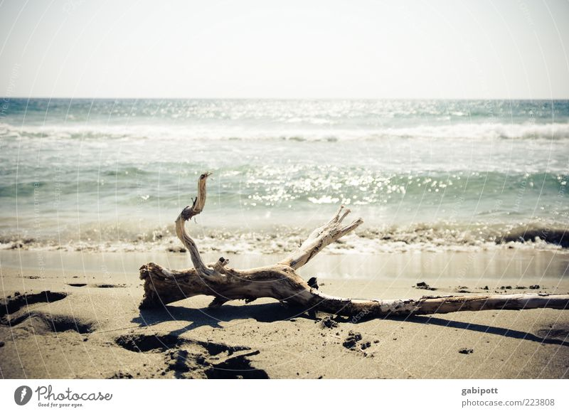 Nature Summer Vacation & Travel Ocean Beach Loneliness Freedom Coast Bright Waves Horizon Lie Large Perspective Uniqueness Branch