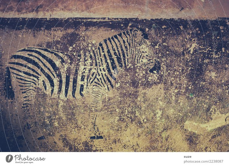 Wall (building) Graffiti Style Art Wall (barrier) Freedom Facade Wild Dirty Wild animal Culture Poverty Transience Broken Past Stripe