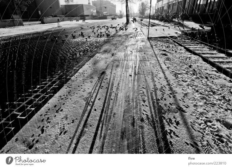 Hamburg Snow Track Environment Sky Winter Weather Town Outskirts Street Lanes & trails Animal Bird Pigeon Flock Bright Ice Footprint Cobblestones Sidewalk