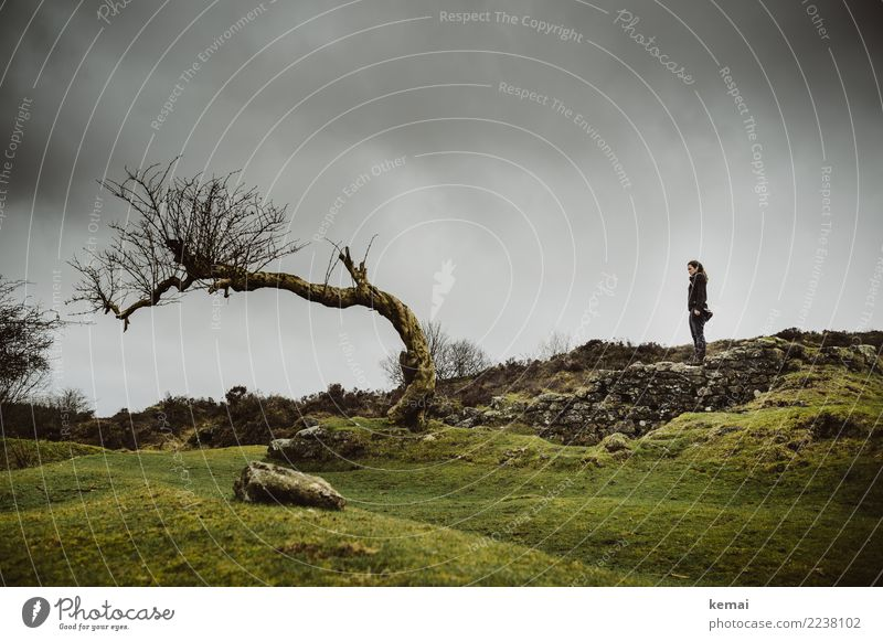 Woman standing on a wall in front of a tree in Dartmoor, England Lifestyle Relaxation Calm Leisure and hobbies Vacation & Travel Trip Adventure Freedom