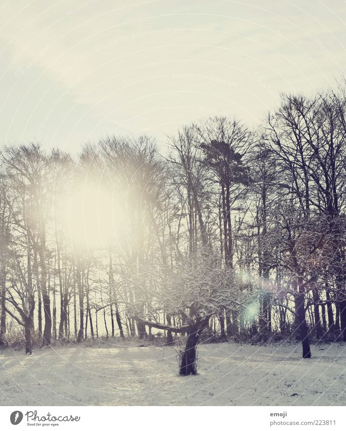 Sky Nature Tree Blue Sun Winter Forest Cold Snow Environment Weather Field Snowscape Beautiful weather Lens flare Twigs and branches