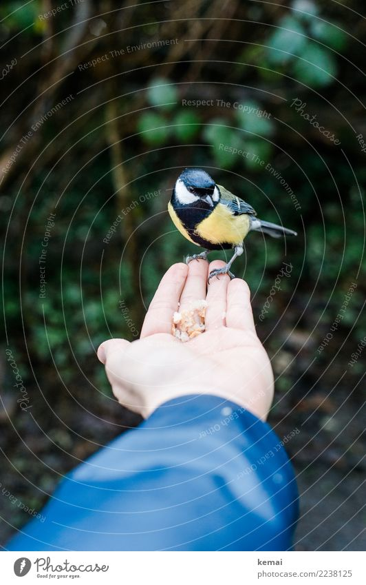 It's served. Food Nut Snack Playing Adventure Human being Life Hand Palm of the hand 1 Environment Nature Animal Park Wild animal Bird Tit mouse Feeding Sit