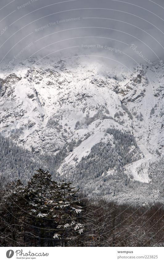 Nature White Tree Snow Mountain Landscape Gray Environment Brown Fog Rock Hill Alps Slope Massive