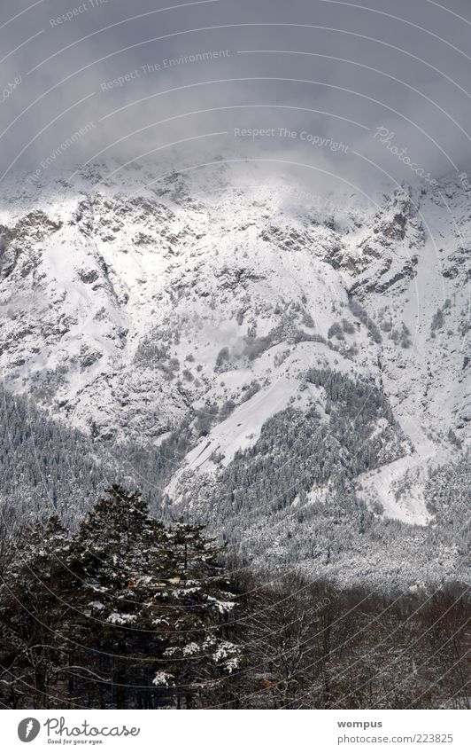 View from my kitchen window Environment Nature Landscape Fog Hill Rock Alps Mountain Brown Gray White Colour photo Exterior shot Day Panorama (View) Snow Tree