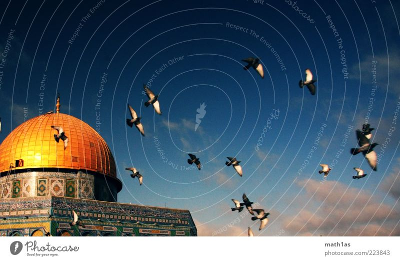Clouds Architecture Freedom Flying Bird Gold Israel Tourist Attraction Near and Middle East Dome Flock Blue sky Spring fever Domed roof