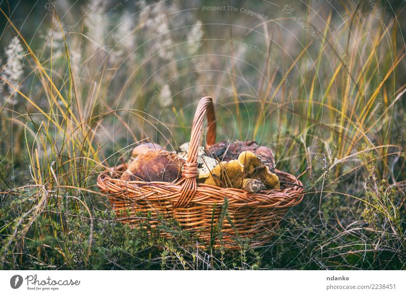 edible wild mushrooms Vegetarian diet Nature Landscape Autumn Grass Leaf Forest Fresh Natural Wild Brown Green White Basket background food Edible Seasons