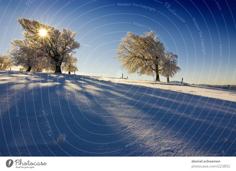 Nature White Tree Blue Sun Winter Cold Snow Mountain Landscape Environment Bright Ice Wind Climate Frost