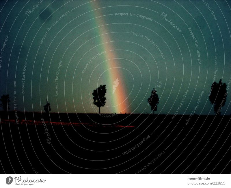 somewhere.... Rainbow Weather Storm Hope Belief Dramatic Dramatic art Kitsch Nature April Tree Silhouette Prismatic colors Natural phenomenon Copy Space bottom