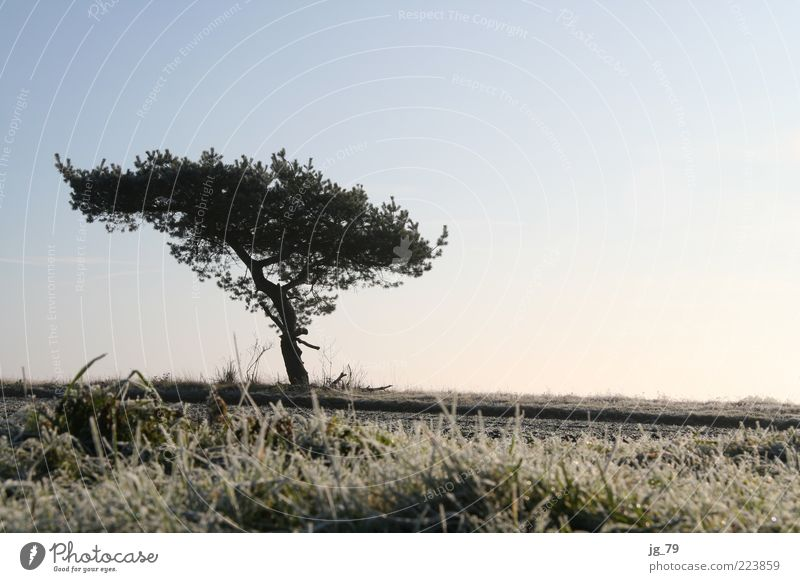 my friend, the tree Harmonious Calm Freedom Winter Nature Landscape Earth Air Sky Horizon Sunlight Beautiful weather Ice Frost Plant Tree Grass Bushes Moss