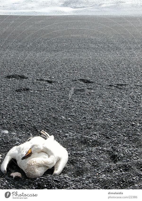 Ocean Beach Death Gray Sadness Sand Horizon Feather Tracks Stride Swan