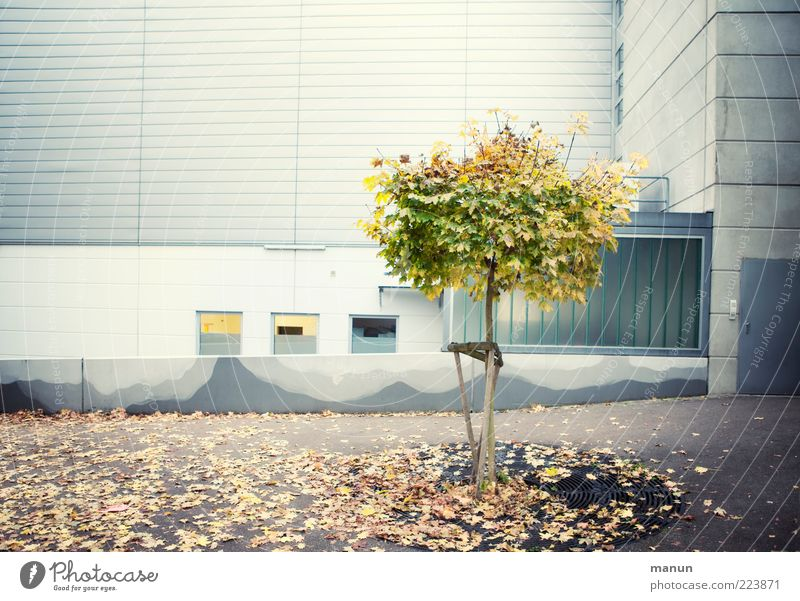 Nature Tree Leaf House (Residential Structure) Far-off places Environment Window Wall (building) Life Autumn Wall (barrier) Architecture Building Lighting Facade Power