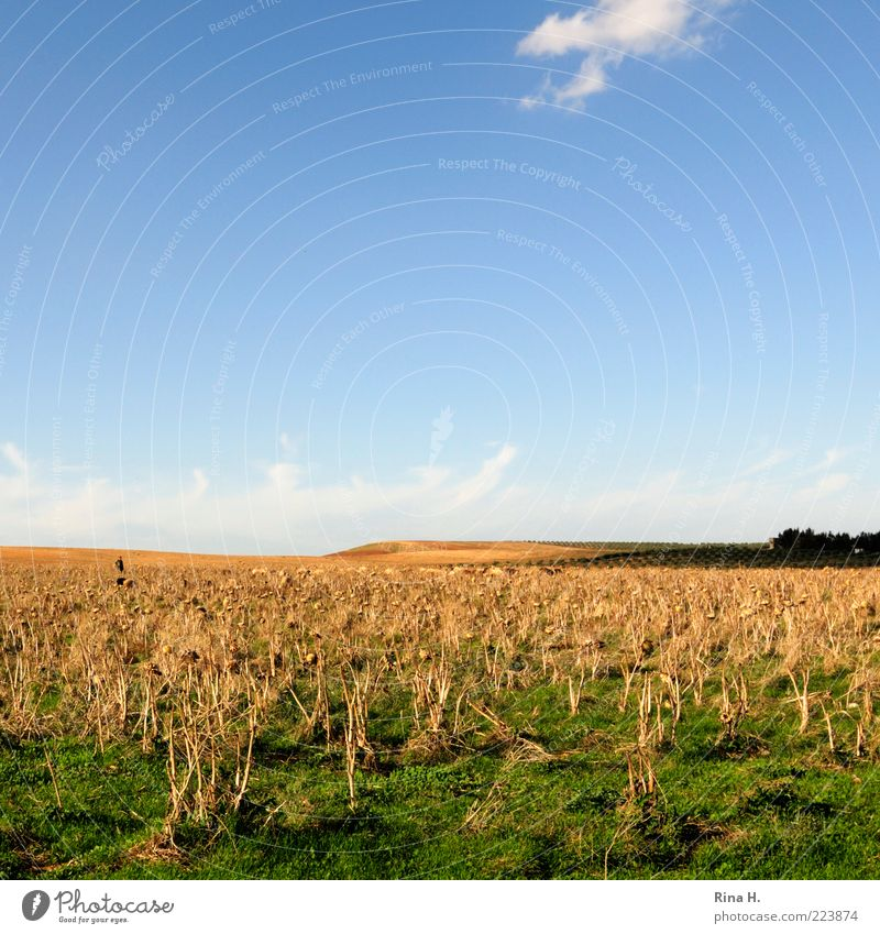 Sky Green Blue Calm Yellow Autumn Emotions Landscape Field Horizon Authentic Dry Agriculture Beautiful weather Shriveled Drought