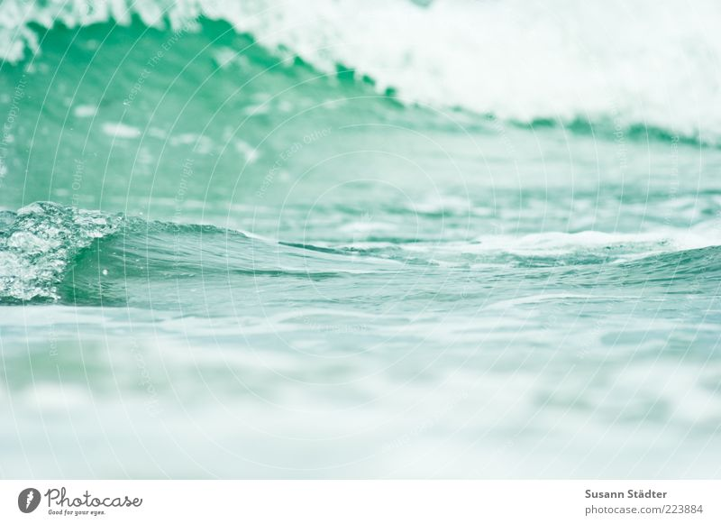 Green Waves Water Baltic Sea Surf Foam Surface Copy Space White crest Surface of water Nature Abstract Swell Tsunami