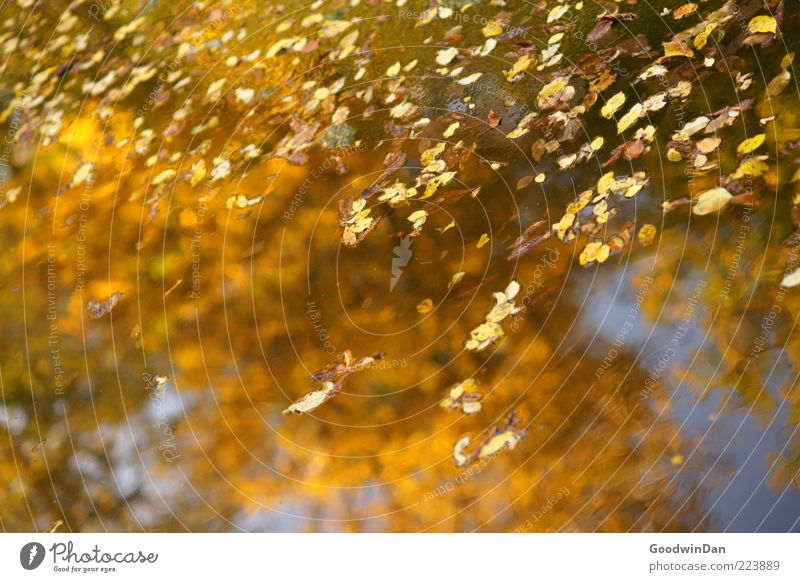 Nature Water Beautiful Leaf Autumn Emotions Environment Moody Glittering Wet Fresh Near Beautiful weather Puddle Autumn leaves Autumnal