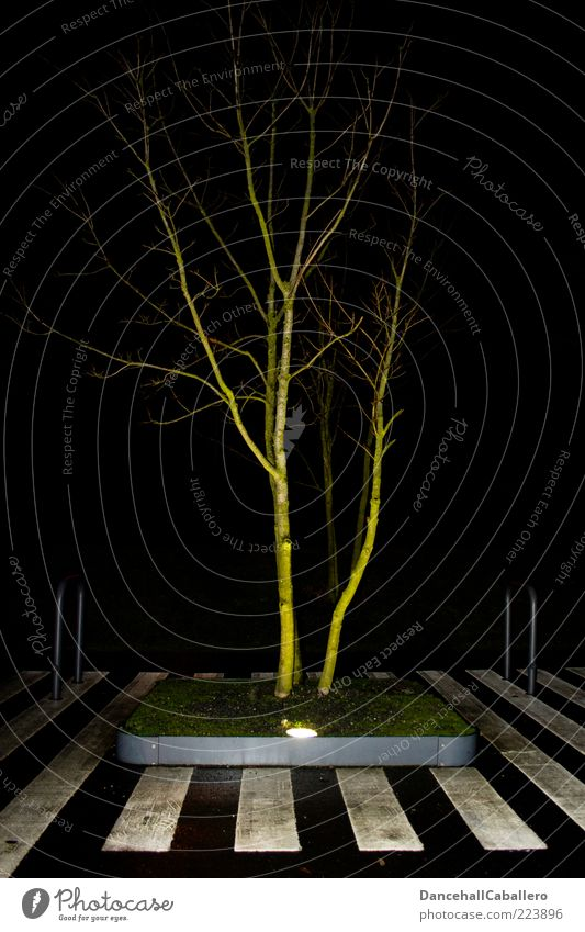light-flooded tree Style Design Calm Lamp Nature Tree Grass Meadow Town Street Lanes & trails Stripe Innovative Climate Creativity Life Zebra crossing