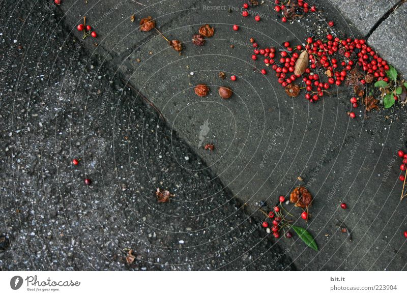 Nature Red Street Cold Dark Autumn Gray Environment Dirty Fruit Lie Round Transience Under Berries Curbside