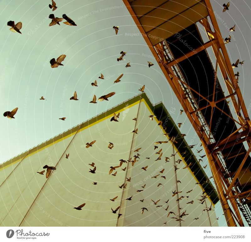 Sky Animal Wall (building) Wall (barrier) Building Air Bird Tall Flying Bridge Group of animals Factory Wing Manmade structures Beautiful weather Perspective