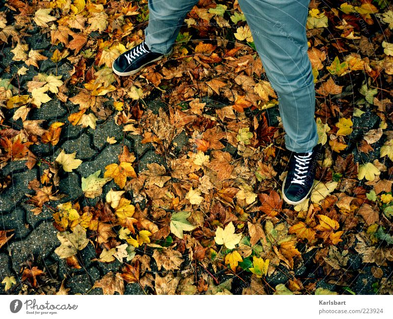 Human being Leaf Colour Autumn Legs Fashion Footwear Stand Uniqueness Pants Autumn leaves Sneakers Easygoing Section of image Partially visible