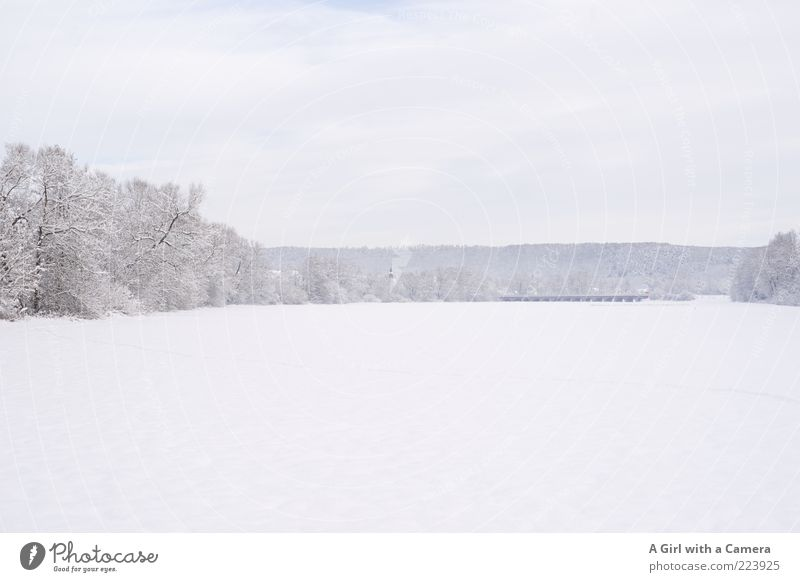 all thing white and beautiful Environment Nature Landscape Winter Snow Field Forest Bright Cold Beautiful White Romance Tree Covered Calm Wide Exterior shot