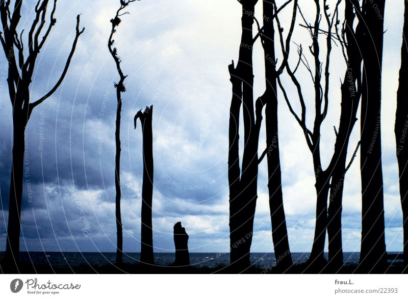 ghost forest Illness Leisure and hobbies Vacation & Travel Summer Beach Ocean Nature Landscape Water Clouds Tree Forest Coast Baltic Sea Nienhagen Germany