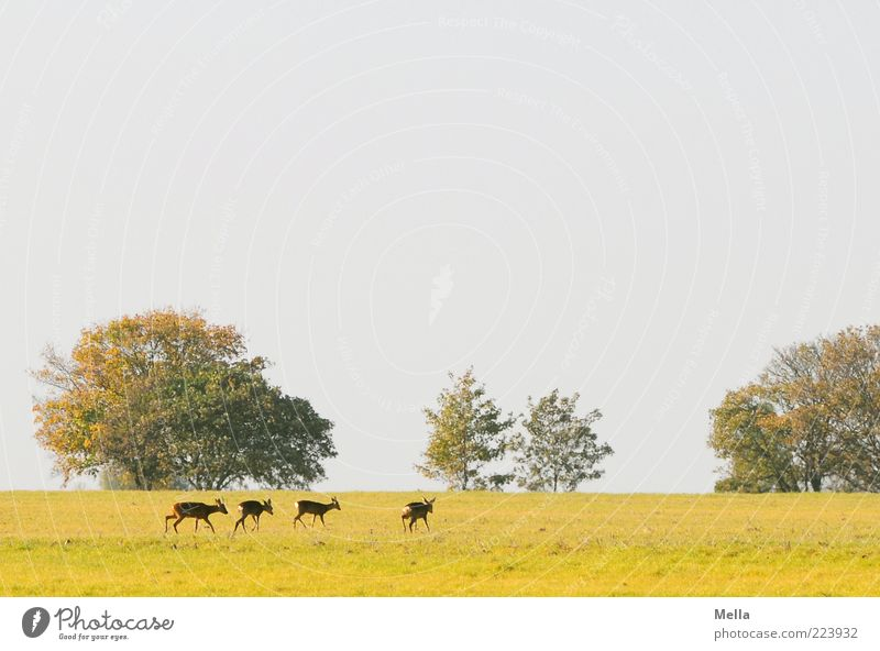 Nature Tree Plant Animal Meadow Freedom Landscape Environment Together Going Natural Wild animal Group of animals Idyll Pasture