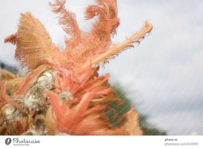 Boahh Accessory Emotions Feather Carnival Colour photo Exterior shot Copy Space right Day Blur Detail Partially visible Section of image Headdress