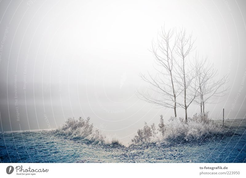 Frozen Landscape II Environment Nature Plant Elements Air Water Winter Bad weather Fog Ice Frost Tree Grass Bushes Lakeside River bank Exceptional Cold Blue