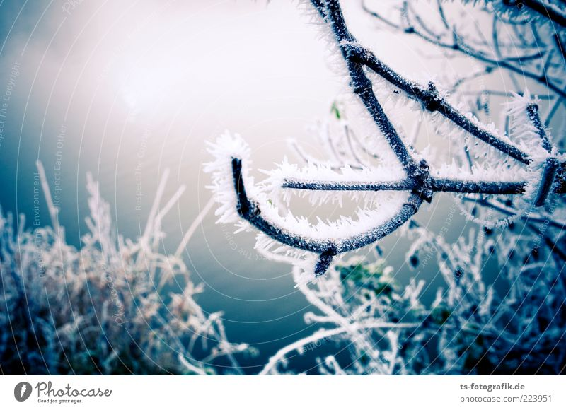 Frozen Landscape III Environment Nature Plant Elements Winter Ice Frost Snow Bushes Cold Blue Hoar frost Branch Curved ossified Colour photo Exterior shot