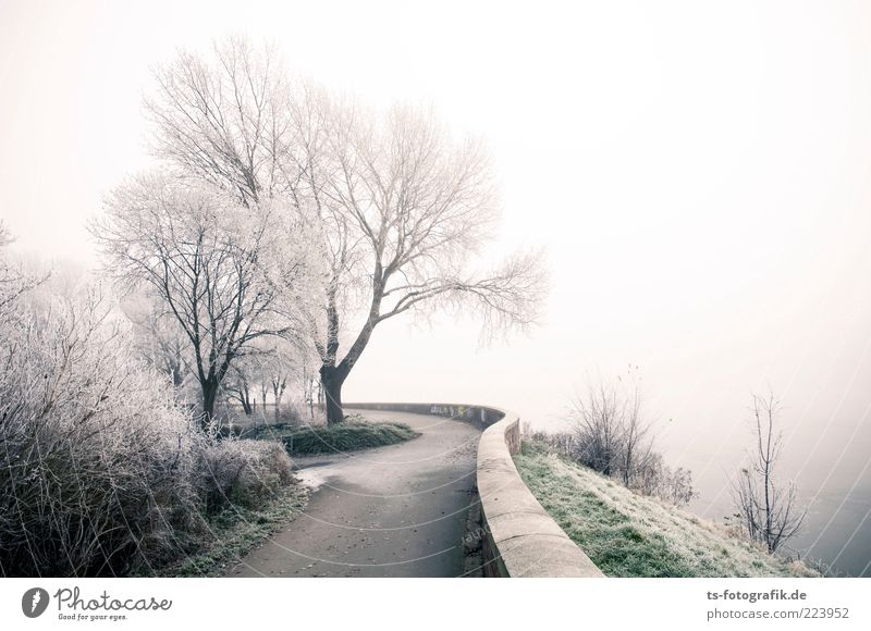 Nature Plant Green White Tree Landscape Winter Cold Environment Snow Lanes & trails Wall (barrier) Air Fog Elements Lakeside