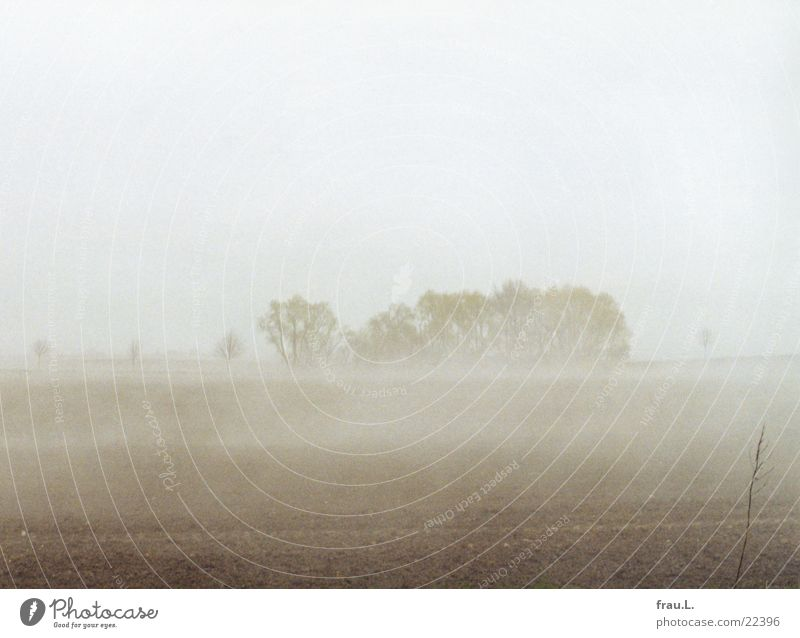 Nature Tree Grass Spring Landscape Field Fog Bushes Baltic Sea April Mecklenburg-Western Pomerania Shroud of fog Wismar Boltenhagen