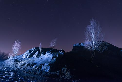 Night Desert Landscape Environment Nature Plant Elements Earth Sand Cloudless sky Night sky Stars Sunrise Sunset Winter Climate change Ice Frost Drought Tree
