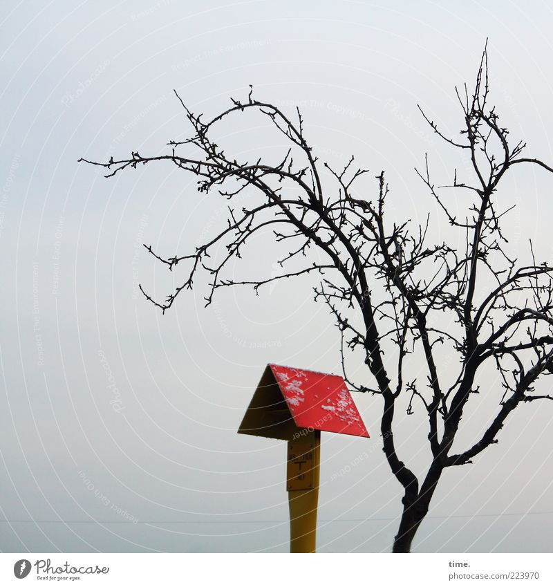 Little Red Riding Hood (Lemgo Version) Winter Plant Tree Metal Signs and labeling Yellow Flexible Bleak Canopy Clue Natural gas Branch Motionless Dynamics