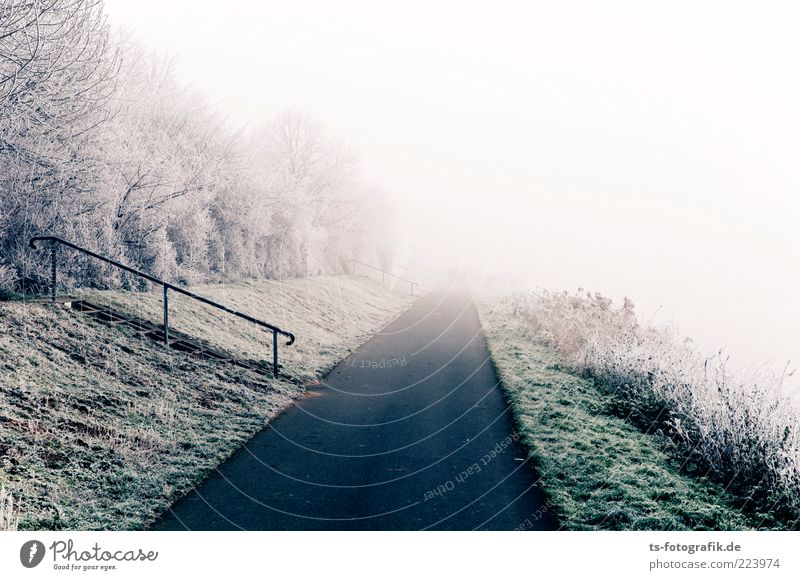 Nature Plant Green White Tree Landscape Winter Far-off places Cold Environment Street Meadow Snow Grass Lanes & trails Gray