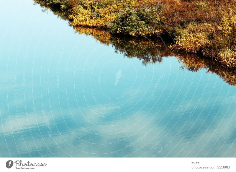bank Calm Environment Nature Plant Water Sky Bushes Moss Lakeside Blue Corner Surface of water Colour photo Multicoloured Exterior shot Deserted Copy Space left
