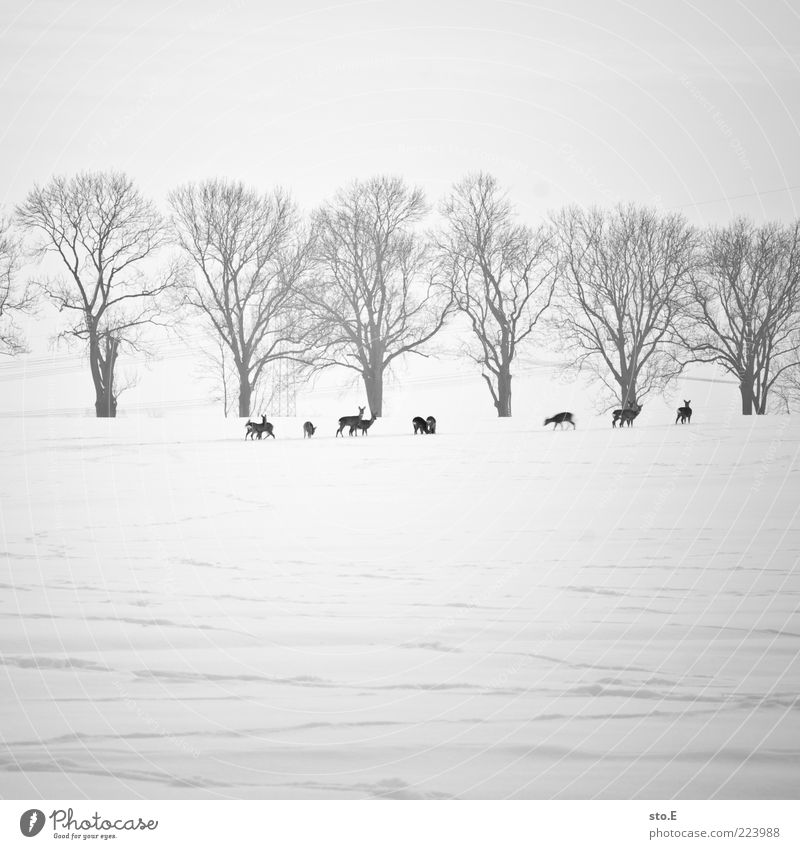 Nature Tree Plant Winter Far-off places Animal Life Cold Meadow Snow Landscape Weather Ice Field Baby animal Horizon