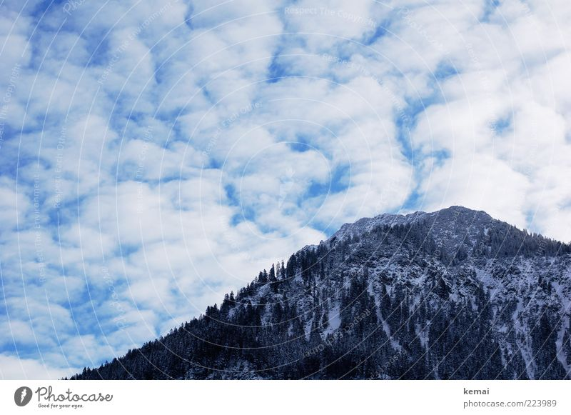 Mountain and clouds Environment Nature Landscape Plant Sky Clouds Winter Ice Frost Snow Tree Wild plant Hill Rock Alps Peak Cold Winter light Forest