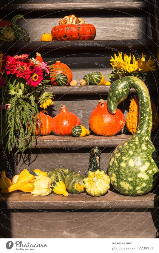 Beautiful Healthy Natural Fresh To enjoy Delicious Vegetable Pure Organic produce Still Life Anticipation Vegetarian diet Quality Grateful Refrain
