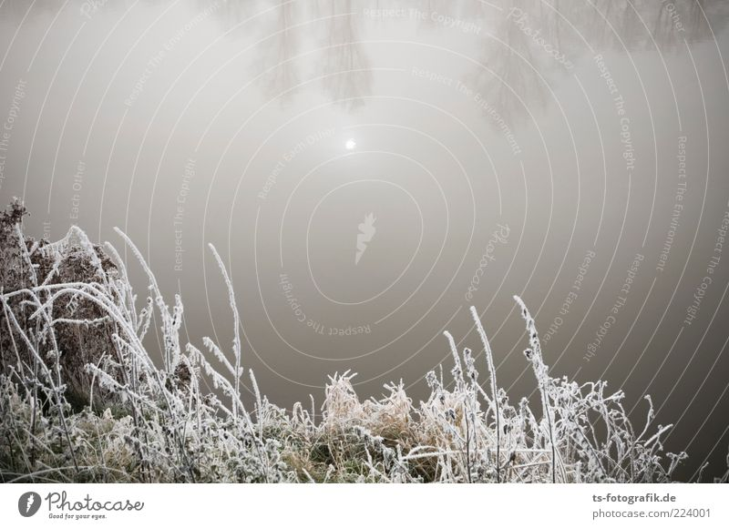 silent Environment Nature Landscape Plant Elements Water Sky Sun Winter Fog Ice Frost Bushes Lakeside River bank Pond Cold Brown Gray White Hoar frost