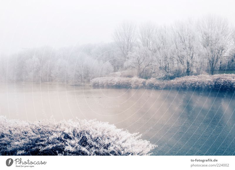 powdered sugar lake Environment Nature Landscape Plant Elements Water Winter Fog Ice Frost Tree Bushes Forest Lakeside River bank Cold Blue Silver White