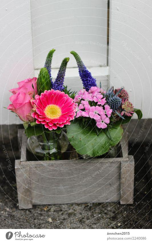 flowers Wood Basket Flower Vase Pink Violet Green Rose Bouquet Nature Exterior shot Gift Souvenir Pick