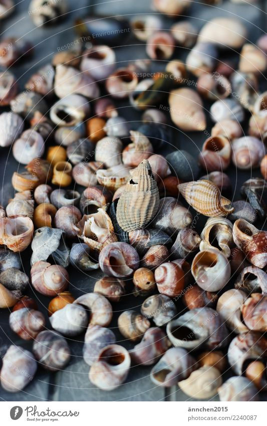 snail shell search Ocean Search Find Mussel Snail shell Collection Water Exterior shot Close-up