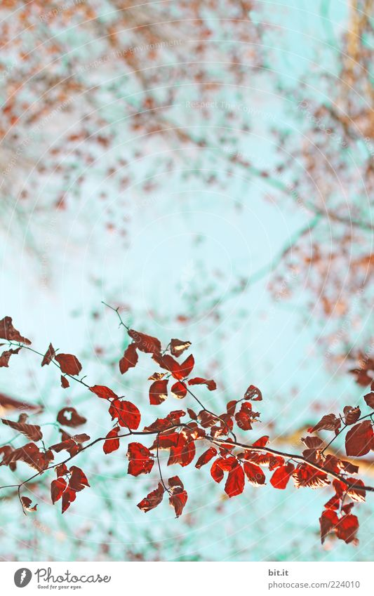 Nature Vacation & Travel Blue Plant Summer Tree Red Leaf Environment Autumn Natural Weather Air Branch Transience Sign