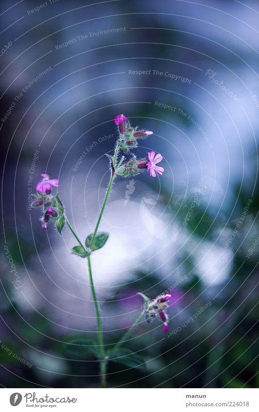 Nature Plant Flower Blossom Spring Pink Spring fever Wild plant Spring flower Forest flower