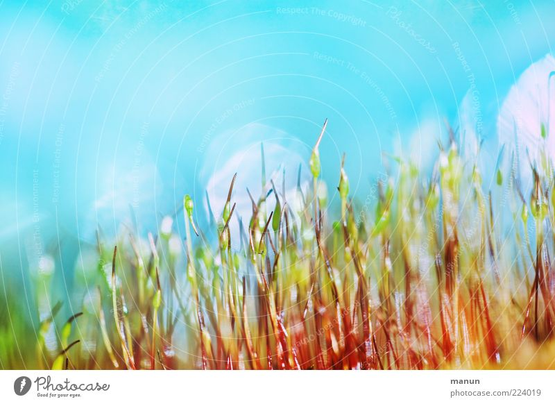 Plant Small Crazy Kitsch Stalk Moss Blue sky