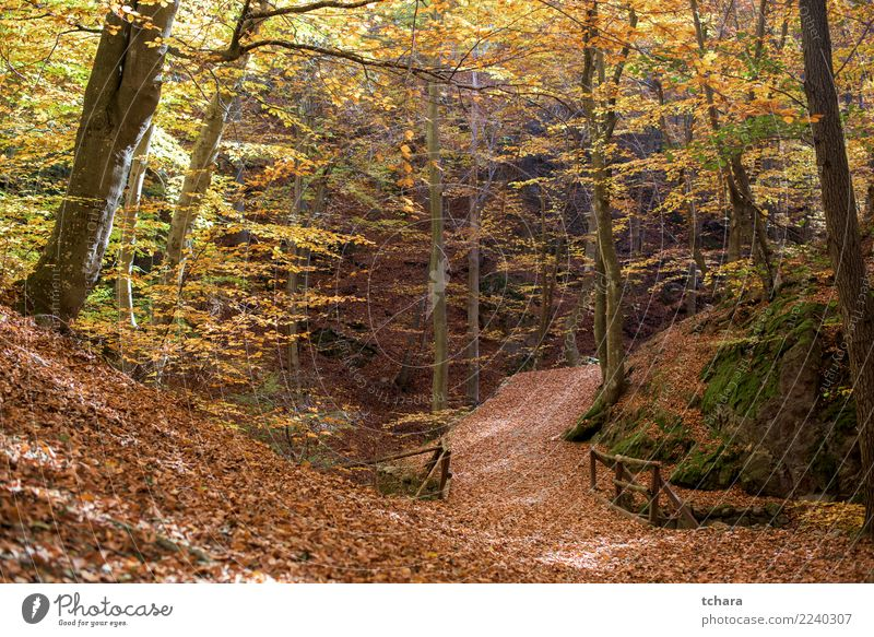 Autumn park Nature Plant Colour Beautiful Green Landscape Tree Red Leaf Forest Street Yellow Environment Lanes & trails Natural